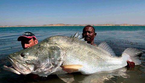 Nile perch fisheries in Lake Victoria